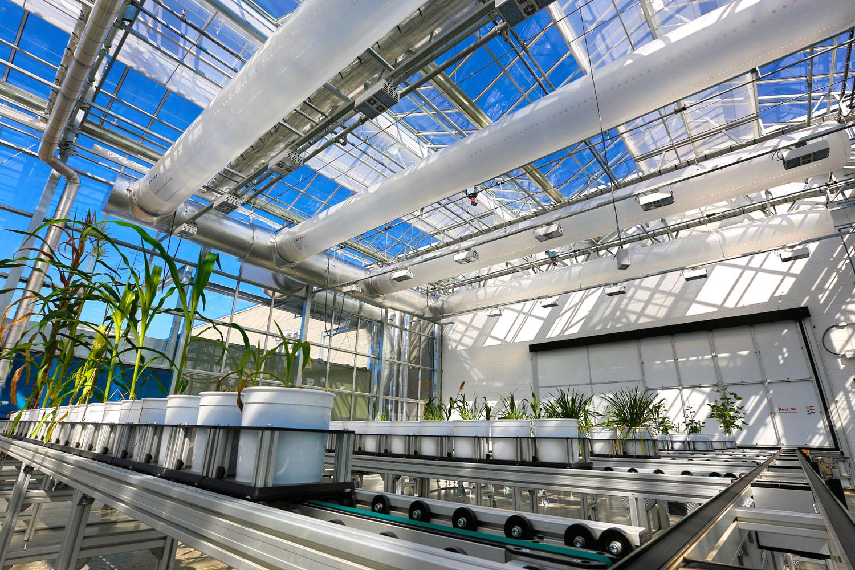 Plants move on a conveyor system in the Greenhouse Innovation Center on Nebraska Innovation Campus.
