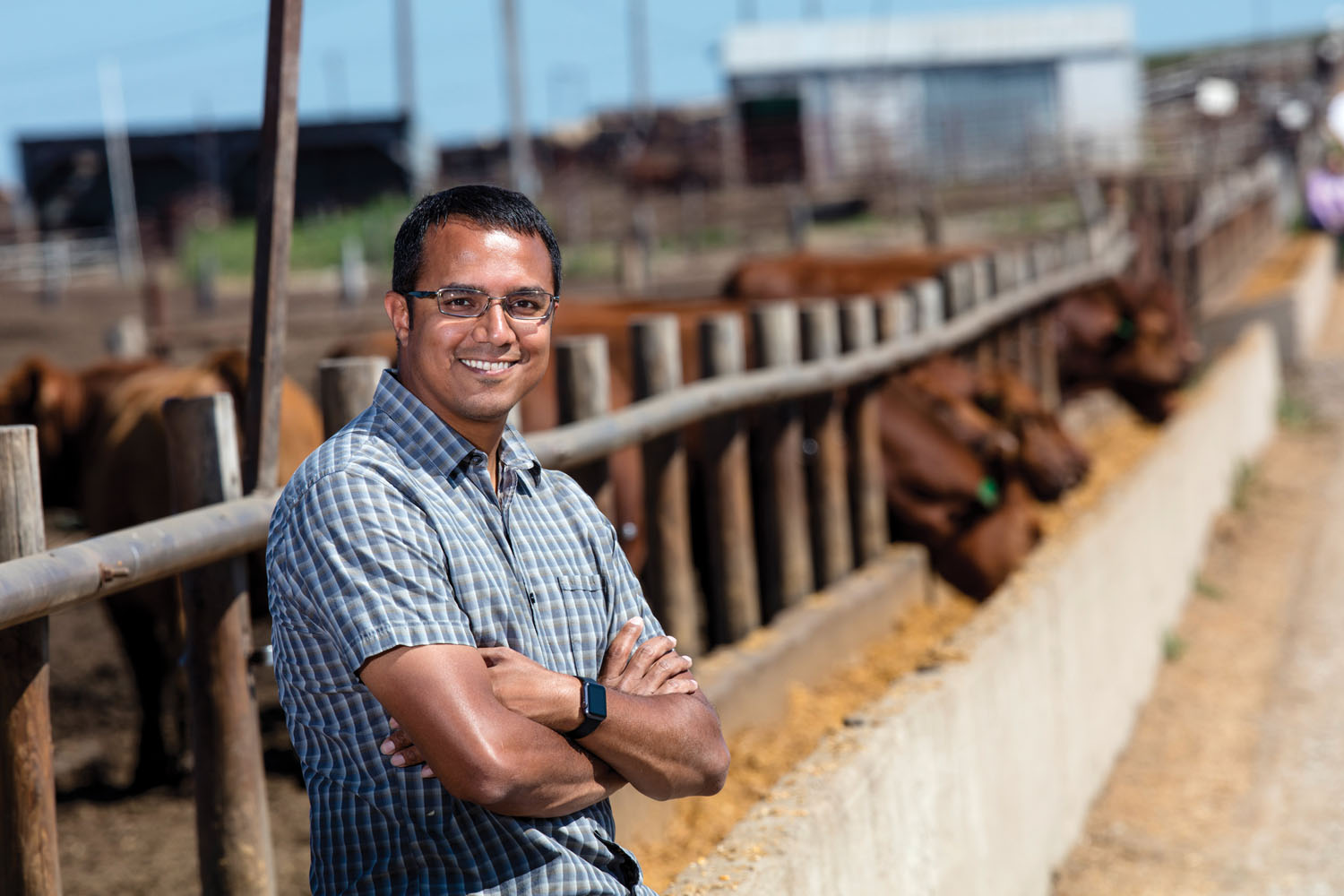 Vishal Singh and his start up company are using telemetric ear tags on cattle to transmit their health back to a central computer. They are testing the tags on cattle at Midwest Feeding Company, Milford, NE. July 31, 2015. Photo by Craig Chandler/University Communications