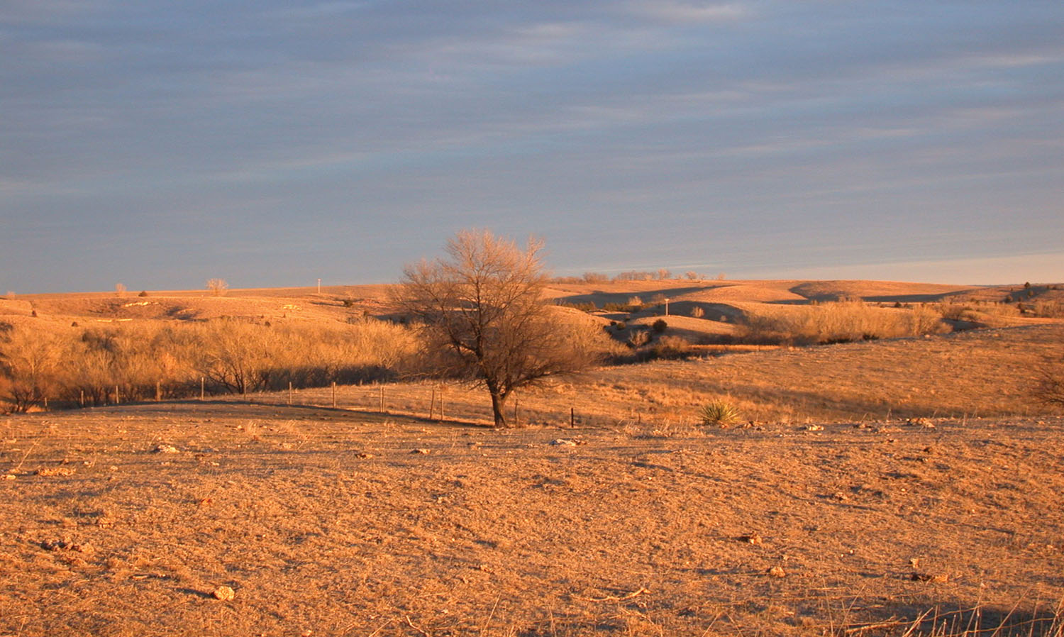 Pasture dried up by drought