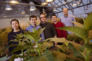 UNL researchers identify target of disease-causing plant pathogens